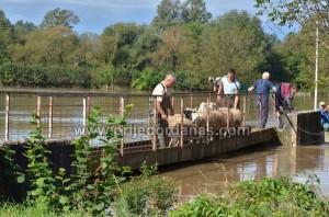 ovce spasavane camcem (2)