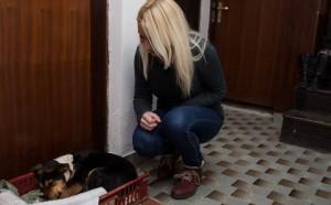 avaz-nepoznata lica pucala na psa (2)