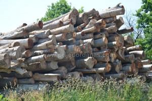 kradja drva