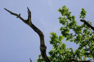 anadolija-hrast-maricka (3)