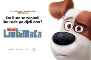 The Secret Life of Pets 3D (2)
