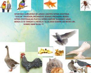 golub-berza-oktobar