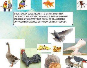 drustvo-golub-izlozba-2017-2